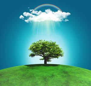 Nachhaltigkeit Baum